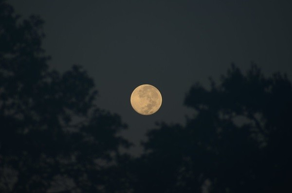 The Sky This Week: Observe the Moon